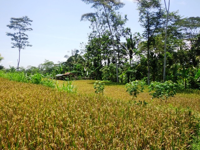 Land for sale in Ubud Bali Stunning natural rice fields view ( LUB138S )
