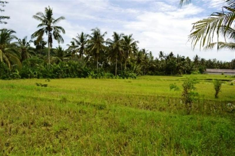 Land for sale in Bedugul Bali with Buyan Lake view ( LBE003S )