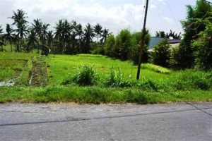 land for sale in canggu, bali TJCG003