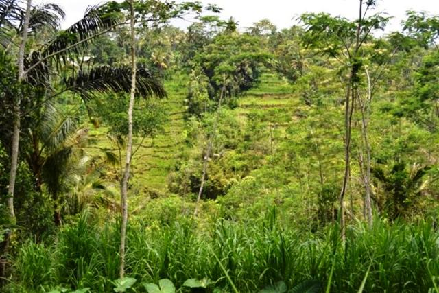 Land for sale in Ubud Bali nice view near Presidential Pallace Tampaksiring (  LUB004S )