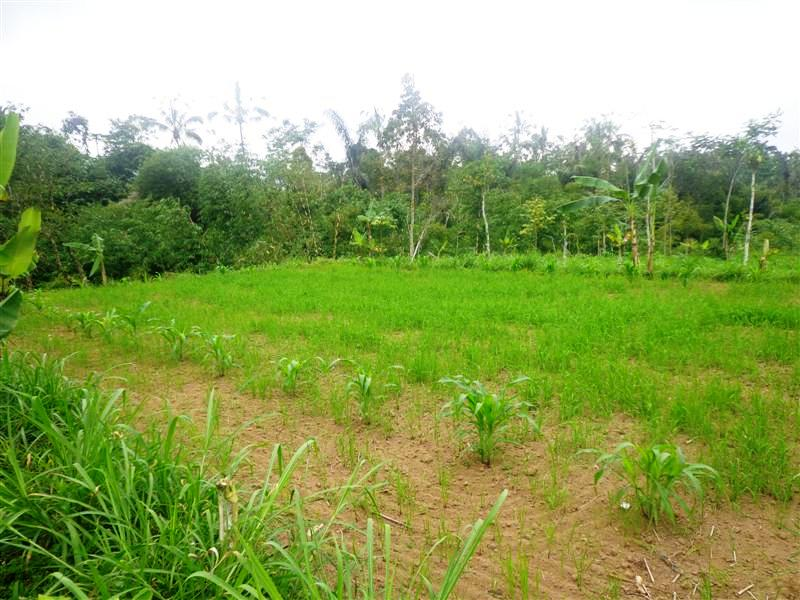 Land for sale in Ubud Bali Cheap Price!! ( LUB111S )