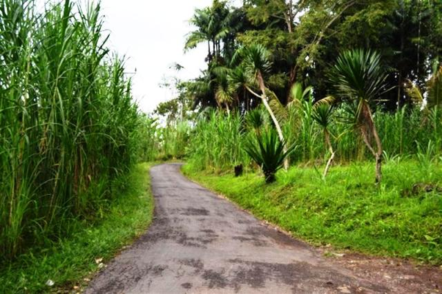 Land for sale in Ubud Bali 143 Are in Pilan with natural view ( LUB013S )