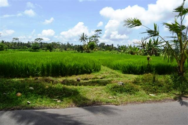 Land for sale in Ubud Bali suitable for villa  ( LUB109S )