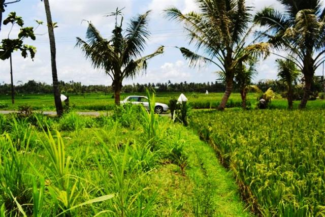 Land for sale in Ubud Bali rice field view suitable for villa ( LUB023S )
