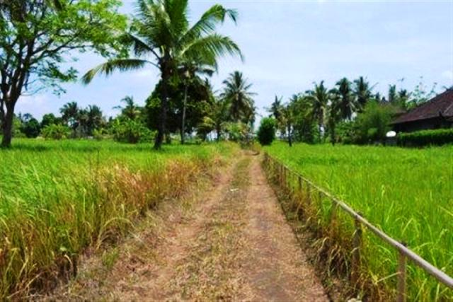 Land for sale in Ubud Bali with stunning mountain view ( LUB031S )