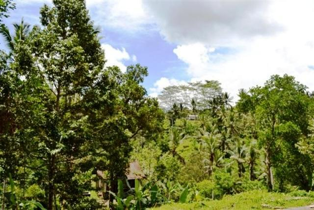 Land for sale in Ubud Tegalalang Bali perfect for villa ( LUB142S )