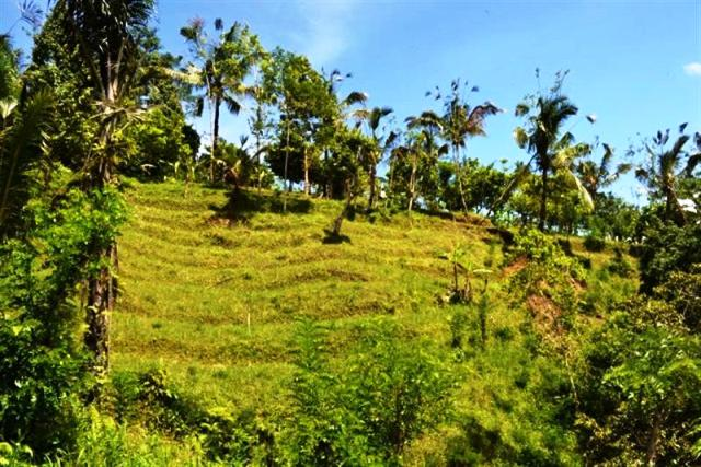 Land for sale in Ubud Bali 750 ares near Ayung River ( LUB045S )