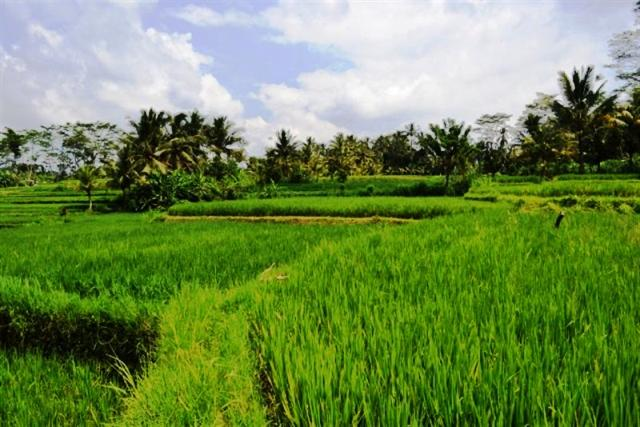 Land for sale in Ubud Bali stunning rice fields view ( LUB046S )