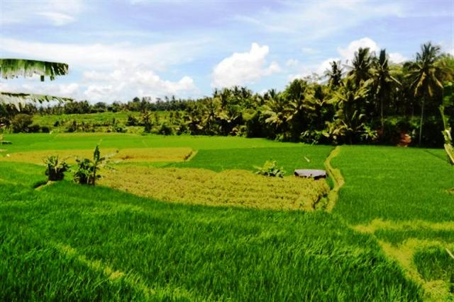 Land for sale in Ubud Bali 5 – 35are suitable for villa ( LUB054S )