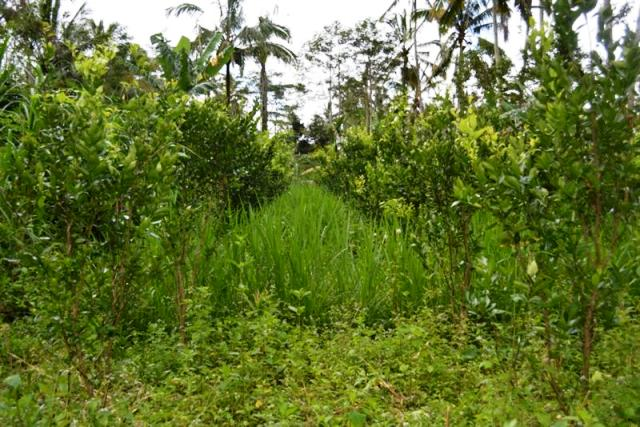 Land for sale in Ubud Bali 45 are with river view ( LUB058S )