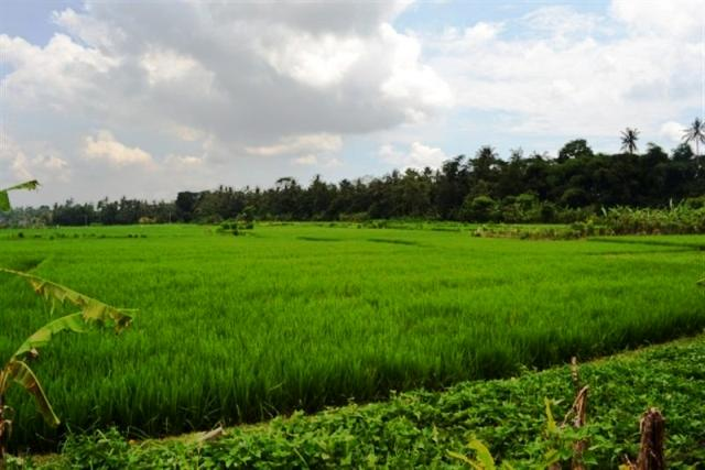 Land for sale in Ubud Bali roadside suitable for restaurant ( LUB067S )