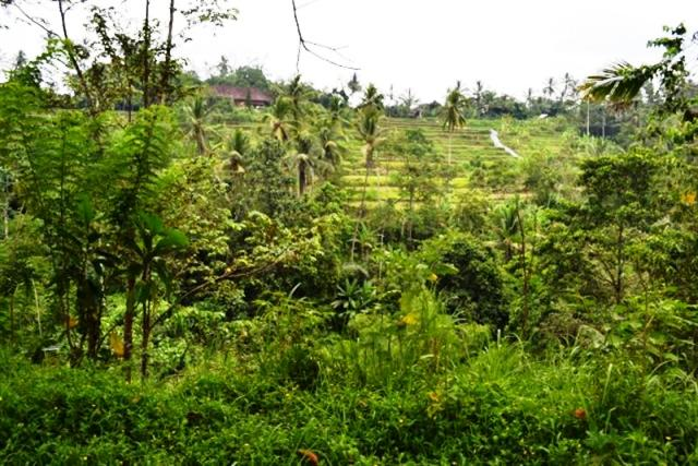 Land For Sale in Ubud Bali with Jungle View ( LUB069S )