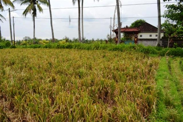 Land for sale in Ubud Bali near Bali bird Park ( LUB070S )