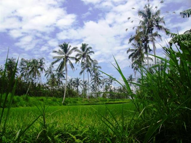 Land for sale in Ubud Bali near Ubud Hanging Garden Hotel ( LUB071S )