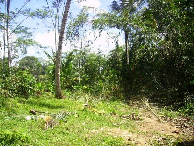 Land for sale in Ubud Bali Close to the Gunung Kawi temple ( LUB076S )