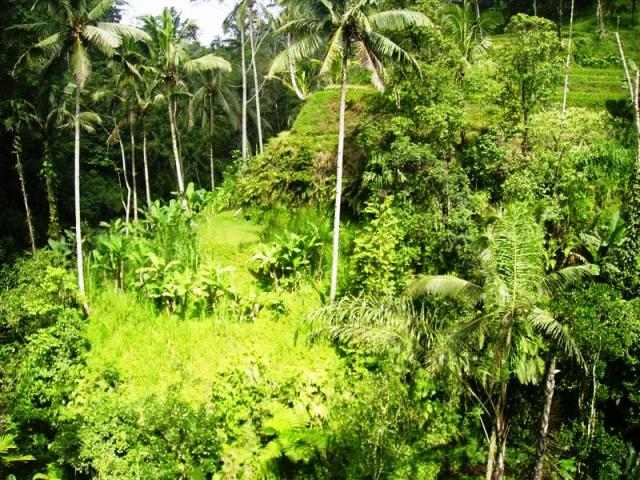 Land for sale in Ubud Bali with stunning natural waterfall view ( LUB081S )