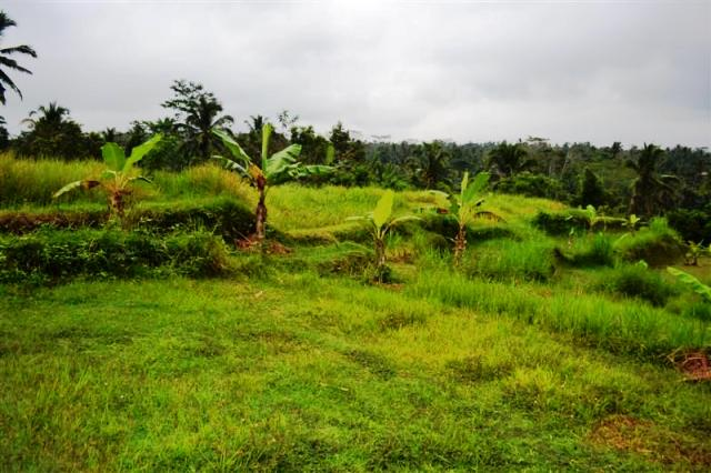 Land for sale in Ubud Bali near Central Ubud Great for Villa ( LUB083S )