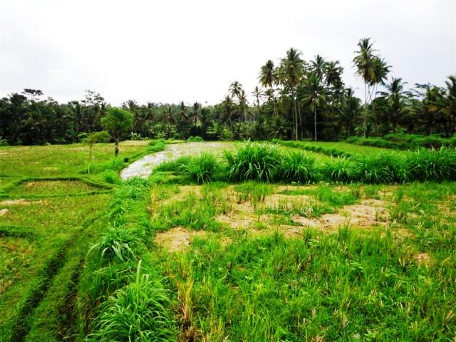 Land for sale in Ubud Pejeng Bali with beautiful ricefield view ( LUB084S )