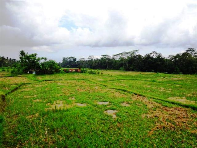 Land for sale in Ubud Bali with ricefield view ( LUB085S )