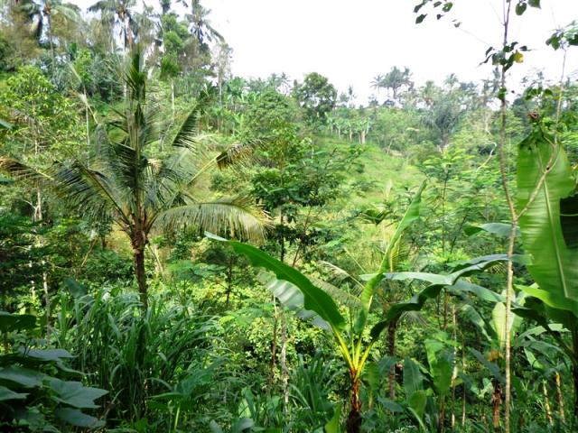 Sloping land for sale in Ubud Bali suitable for villa ( LUB091S )