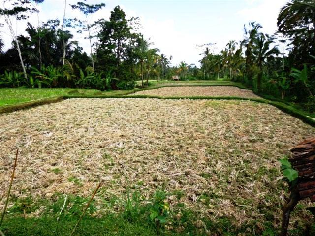 Land for sale in Ubud Bali with rice field view ( LUB095S )