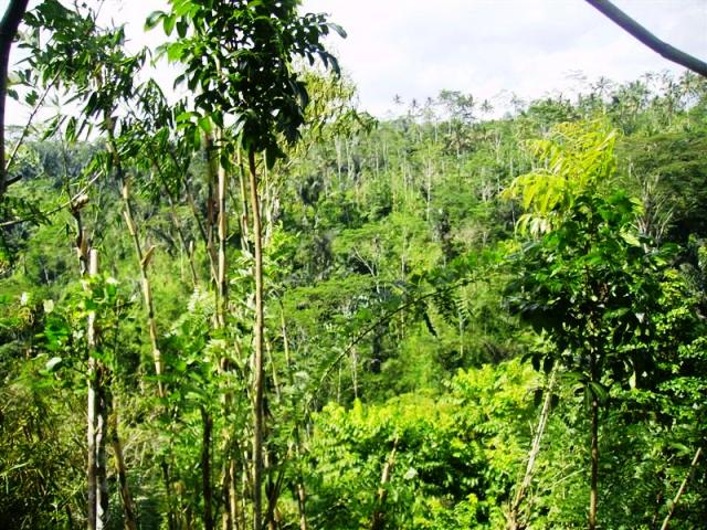 Land for sale in Ubud Bali with stunning river view ( LUB097S )