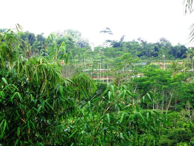 Land for sale in Ubud Bali Rice field and river views ( LUB098S )
