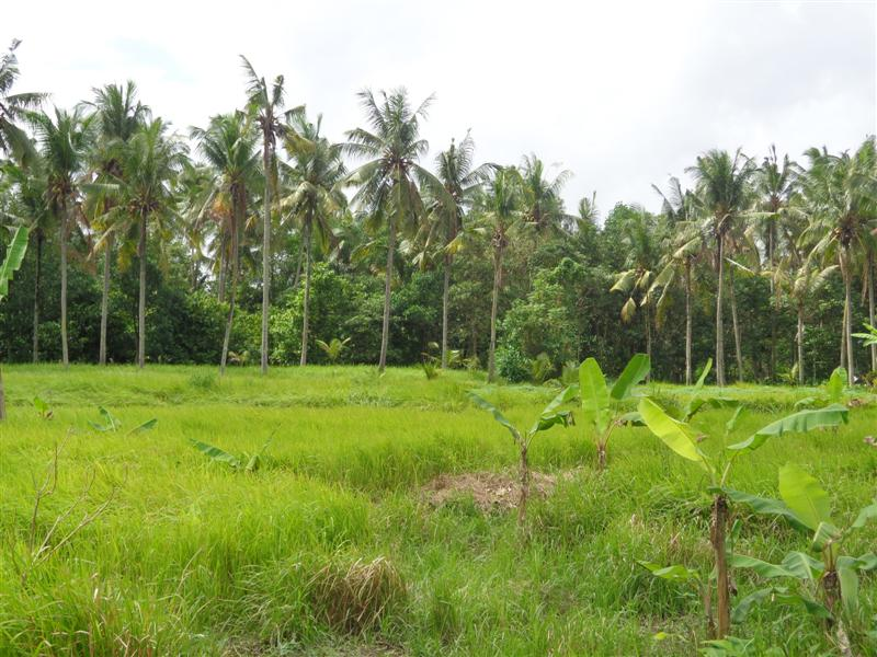 Land for sale in Ubud Bali adjacent with villas ( LUB106S )