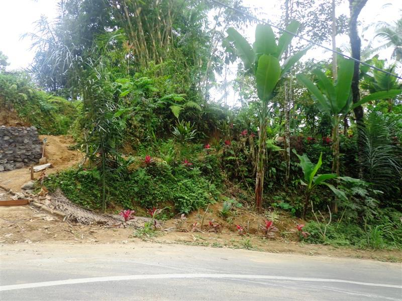 Land for sale in Ubud Bali with cliff view ( LUB110S )