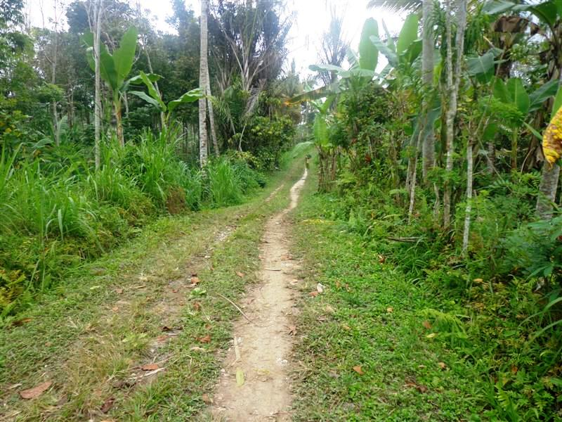 Land for sale in Ubud Bali good for investment  ( LUB112S )