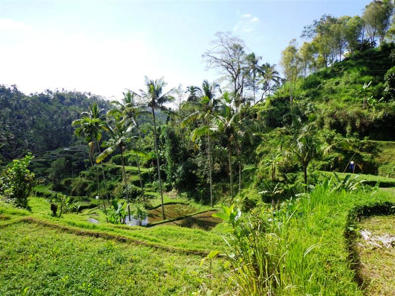 Land for sale in Ubud Bali 2100 m2 in Ubud Pejeng ( LUB144S )