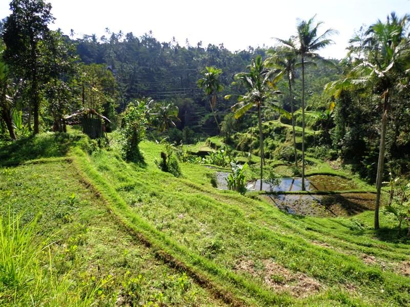 Land for sale in Ubud Bali Stunning rice fields view ( LUB114S )