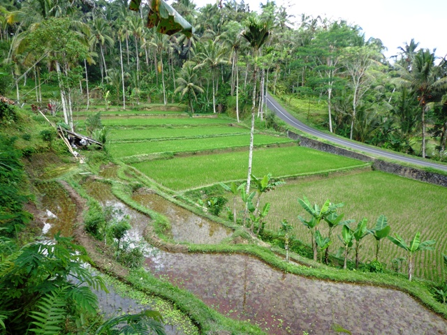 Stunning view rice fields land for sale in Ubud Bali Reasonable Price ( LUB115S )