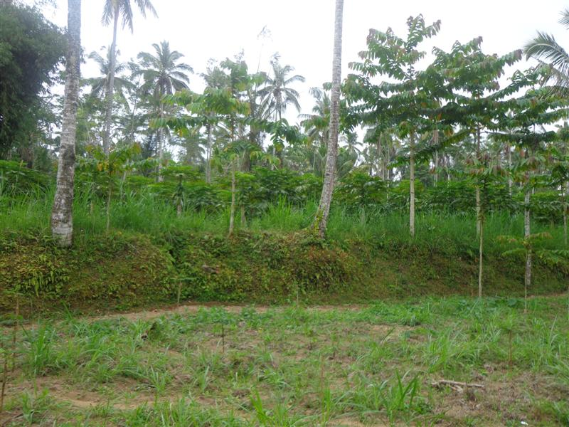 Nice land for sale in Ubud Bali aspect for villa ( LUB118S )