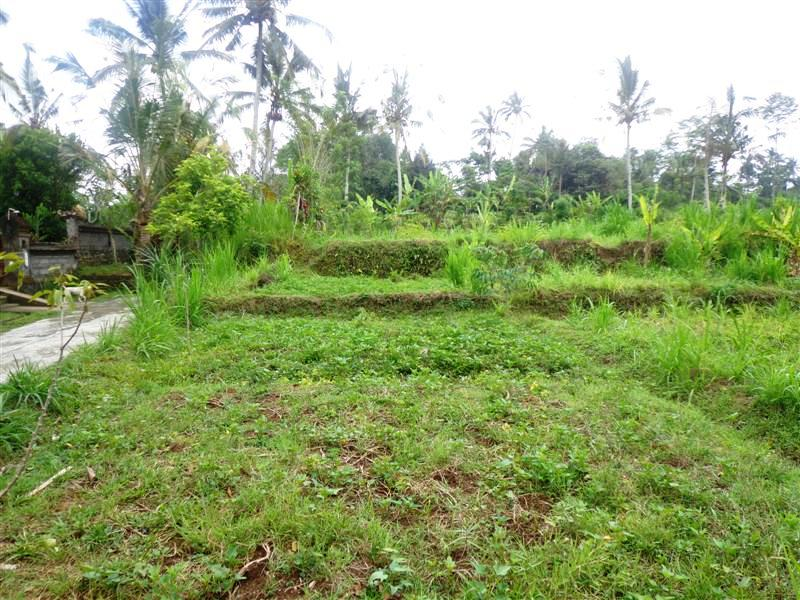 Land For Sale In Ubud Pejeng Bali With rice paddy view ( LUB122S )