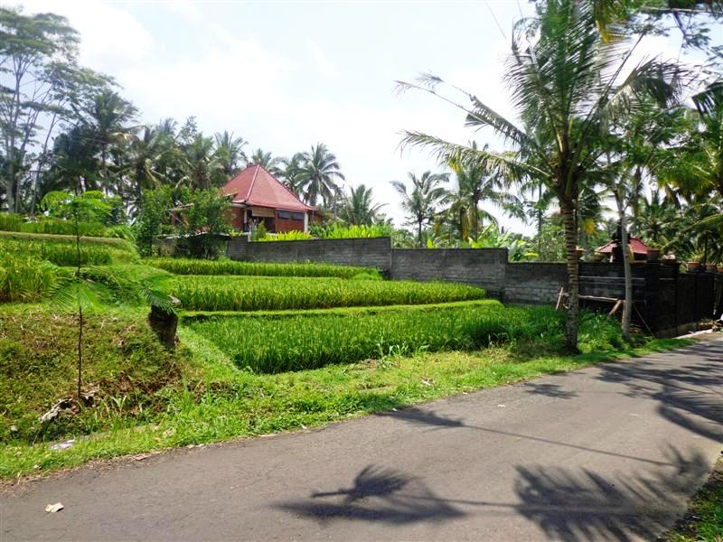 Roadside Land for sale in Ubud Bali with rice fields view ( LUB124S )