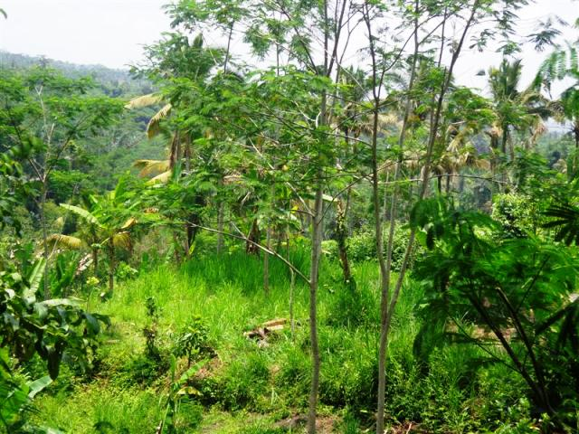 Land for sale in Ubud Tegalalang Bali Near Bagus Jati Hotel ( LUB125S )