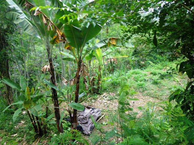 Land for sale in Ubud Bali near the Bagus Jati Hotel Tegalalang ( LUB127S )