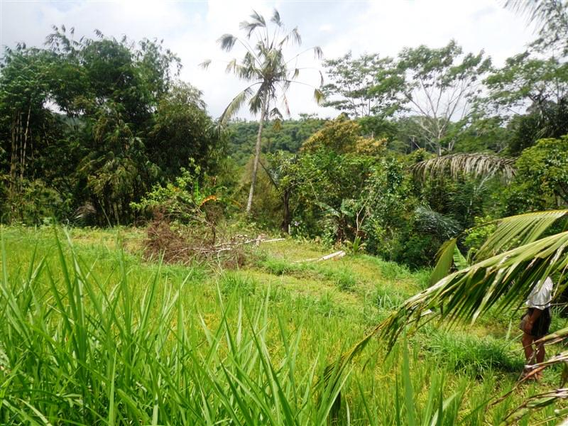 Land for sale in Ubud Bali with rice field View in Tegalalang ( LUB128S )