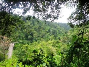 Land for sale in Ubud Payangan