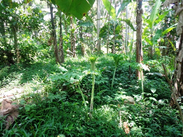 Land for sale in Ubud Bali 650 m2 Great natural view ( LUB137S )
