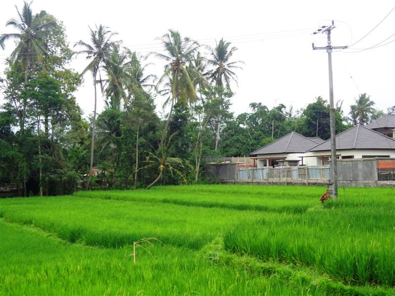 Land for sale in Ubud Bali with rice fields view in Tampaksiring ( LUB143S )