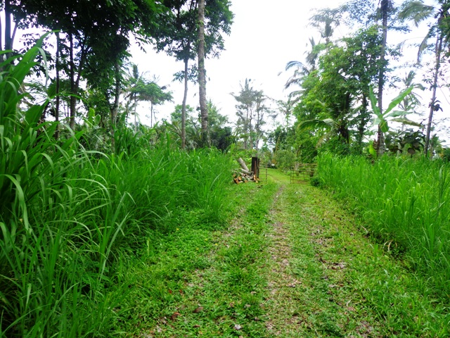 Land for sale in Ubud Tegalalang Bali Magnificent view ( LUB146S )