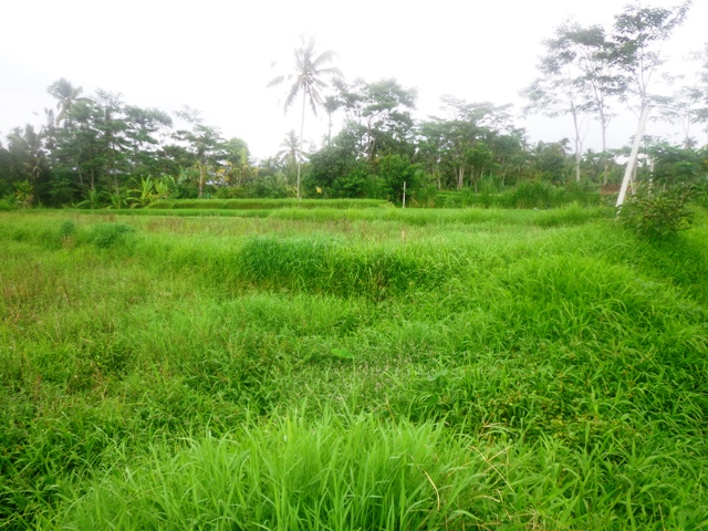Land for sale in Ubud Bali perfect for villa with rice fields view ( LUB148S )