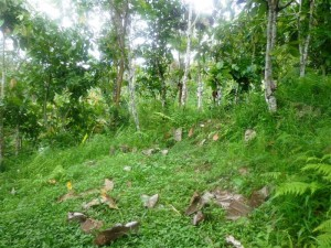 Land for sale in Ubud Tampak siring