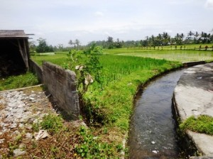 Land for sale in Ubud by Bali Real Property