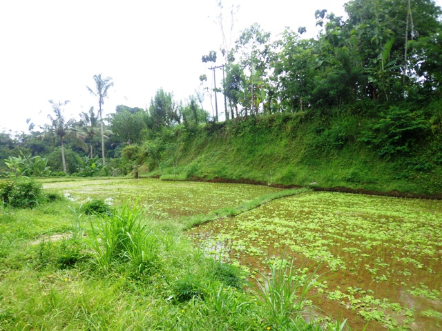 Land in Ubud for sale 1,700 sqm Stunning view
