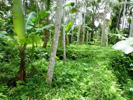 Land in Ubud Bali For sale 5,000 m2 with Tropical jungle view