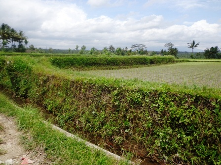 Land for sale in Bali 27 Ares in Ubud Pejeng