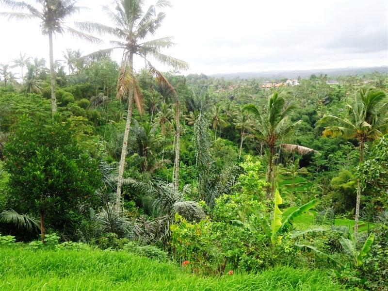 Land for sale in Ubud 120 Ares with by the river